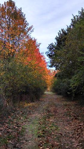 Creek trail fall colors
