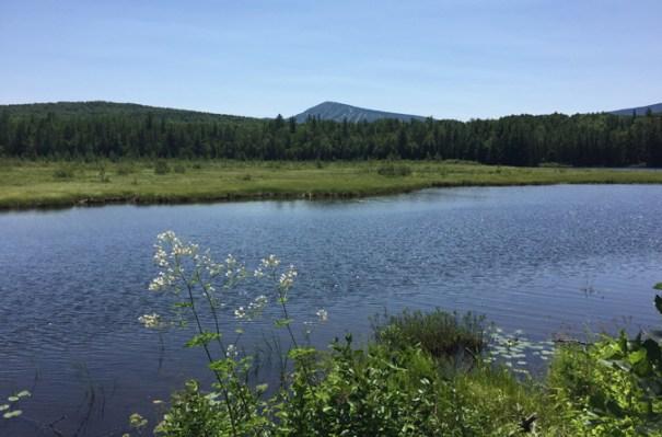 Stratton Brook Pond Sugarloaf