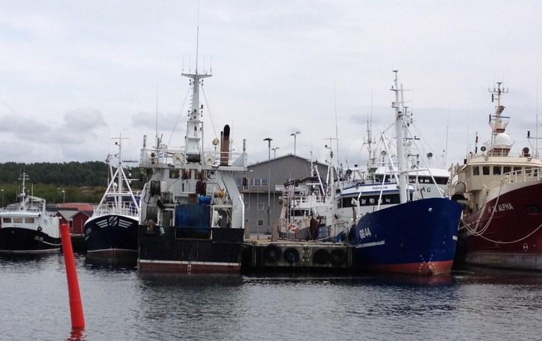 fiskeback12juli_2015-3 - 10