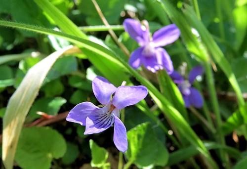 Violet spotlight
