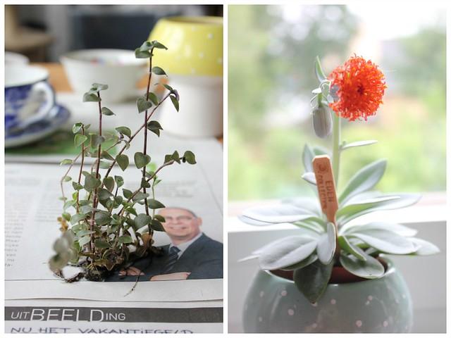 DIY Teacup Planter