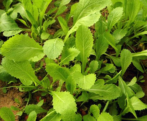 Hoi An Herb Garden