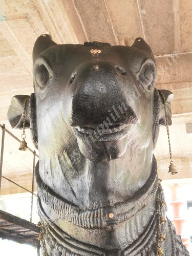 Nandi gritting his teeth in anger, Thirupungur Sivalokanathar Temple