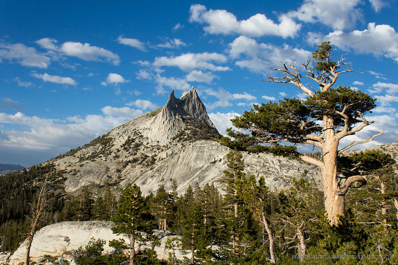 Cathedral peak and the tree companion