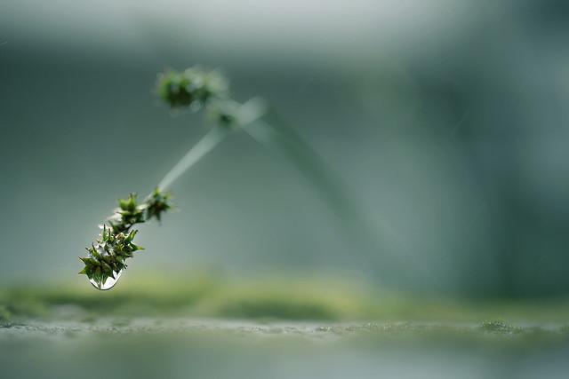 Regnværsdag