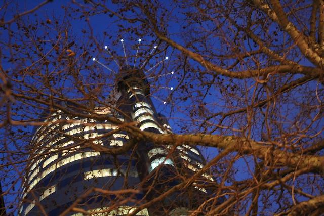 Thursday: Majestic Centre, majestic tree