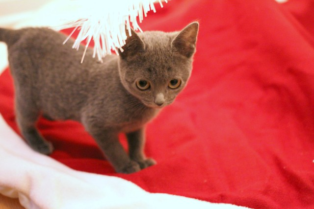 our Christmas kitten