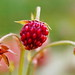 Wild strawberries I