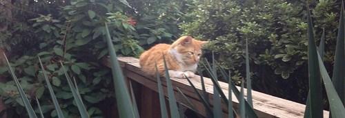Fluffy orange boy