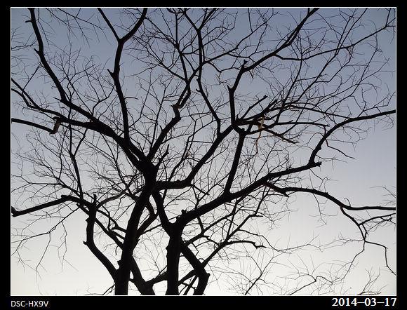 20140317_Tree