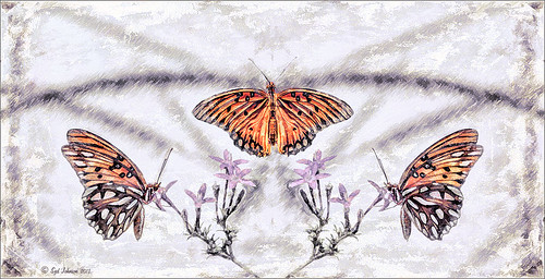 Monarch Butterflies using Symmetry PSD file