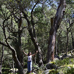 06 Viajefilos en Australia. Cathedral Rock NP 11