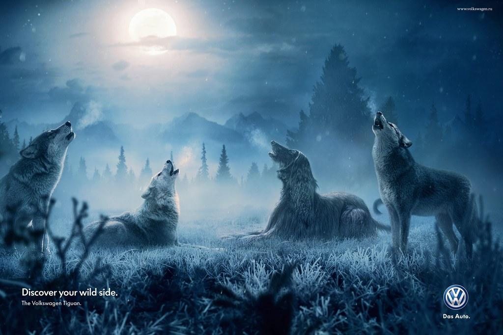 VolksWagen - Wild Dog