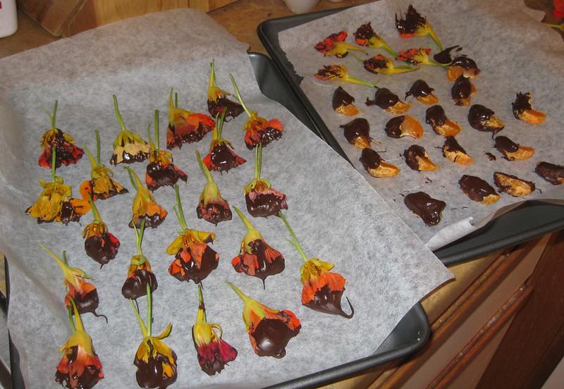 Chocolate Dipped Nasturtiums