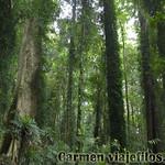 07 Viajefilos en Australia. Dorrigo Rainforest NP 09