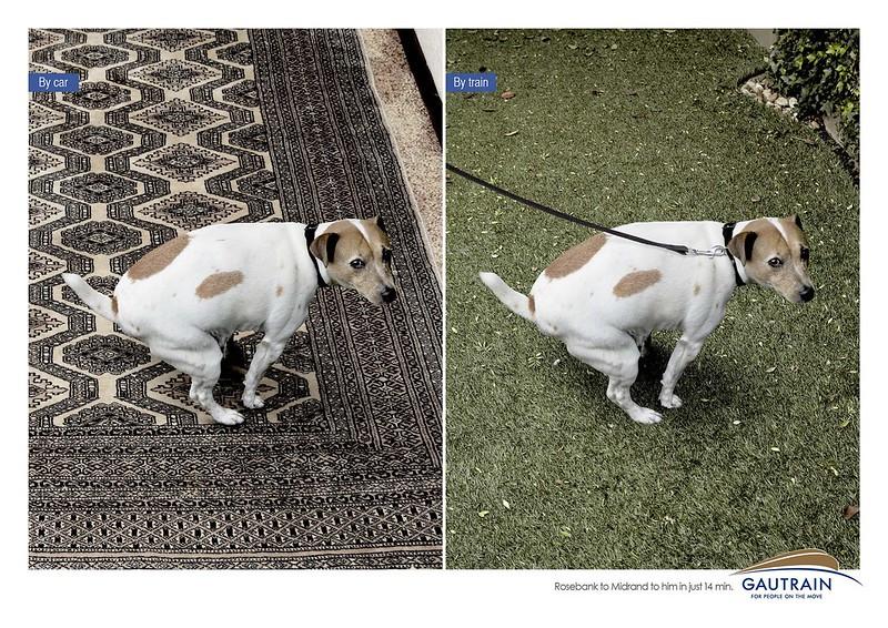 Gautrain Car-Vs-Train Dog