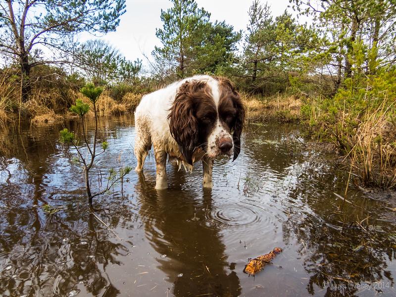 Max at Pond # 2