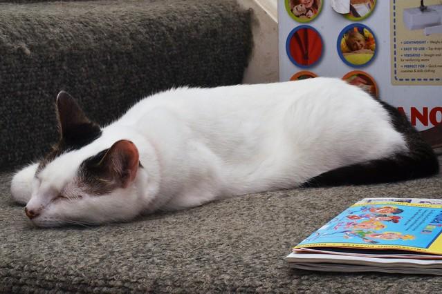 Lazy Barn Cat
