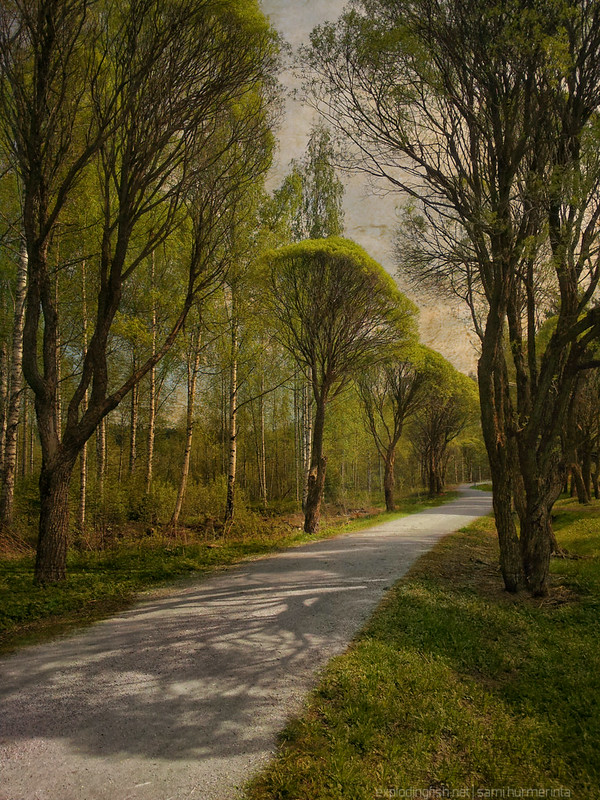 Winding dirt road lined with trees