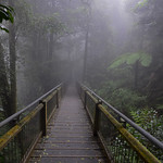 07 Viajefilos en Australia. Dorrigo Rainforest NP 28