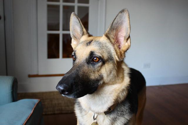 Watchful shepherd