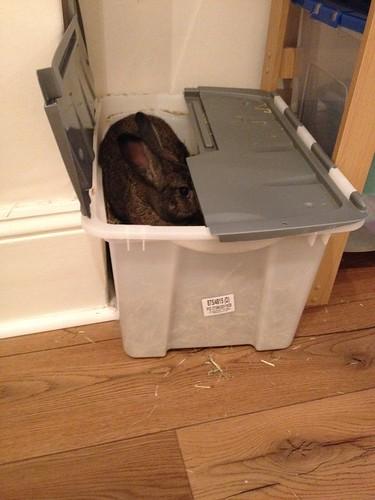Oscar in hay box (2)