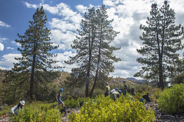 Angeles Forest Restoration