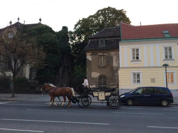 Bethany's Birthday in Vienna (9/28/14)