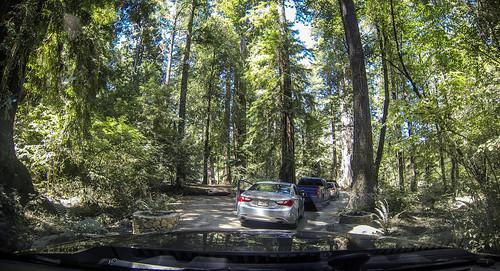 Coastal Redwoods and Fog-034