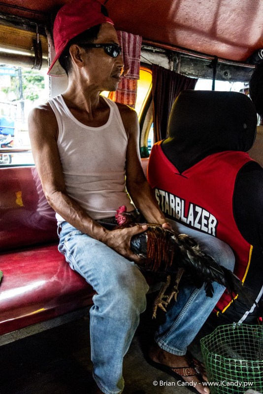 Man Holding Cock in Jeepney