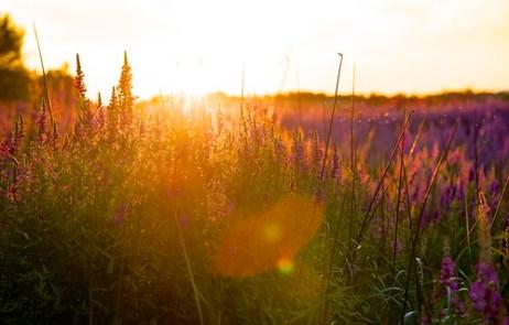 Purple at dusk