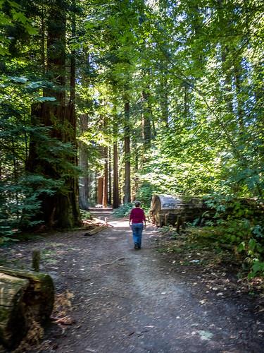 Coastal Redwoods and Fog-055