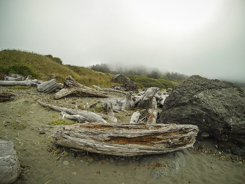 Driftwood at Twin Rocks