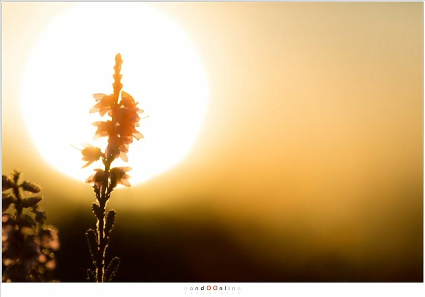 met de zon in beeld