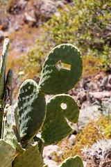 Kaktuswegweiser
