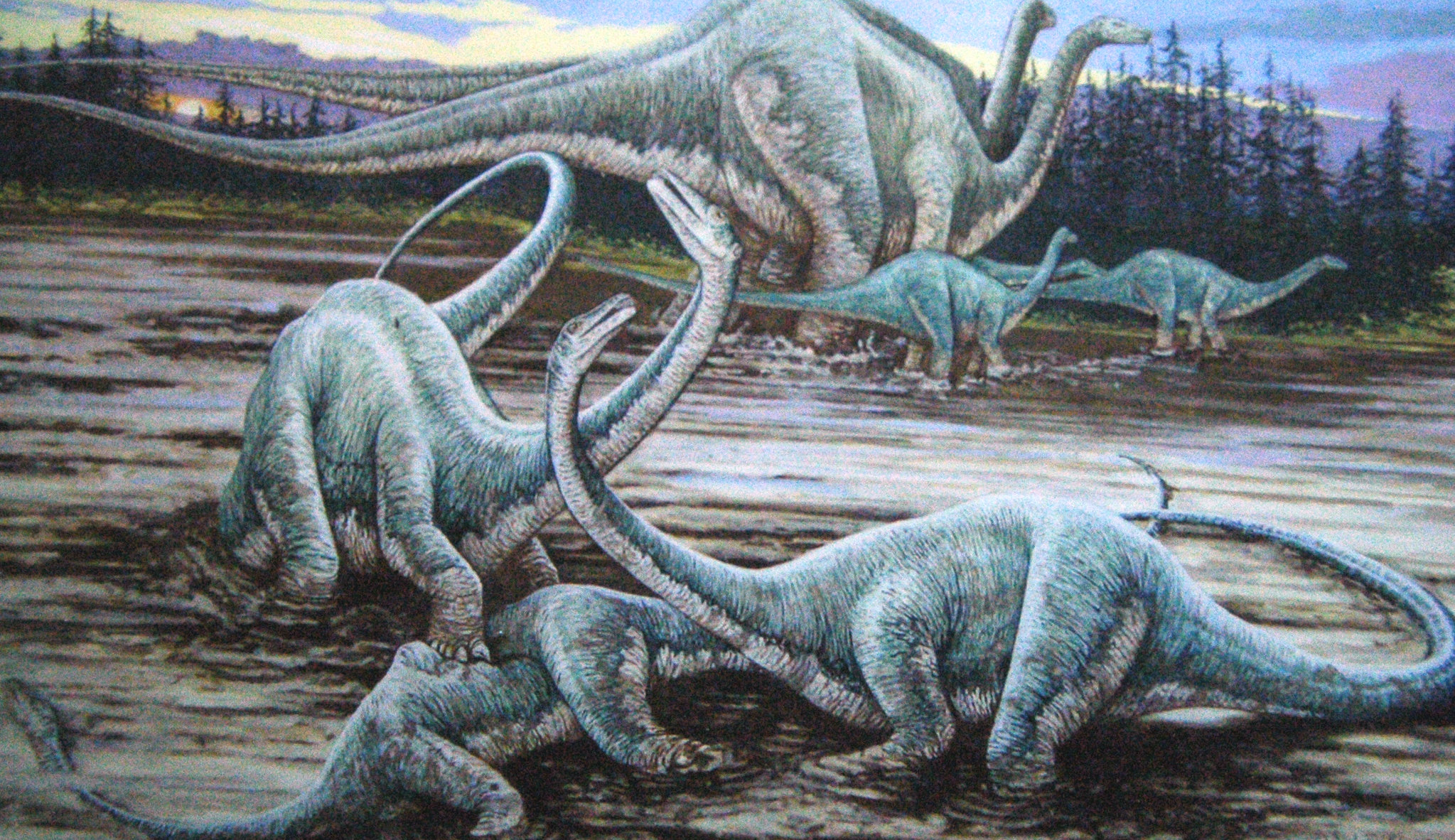 Diplodocus Sauropod Dinosaurs Morrison Formation Upper