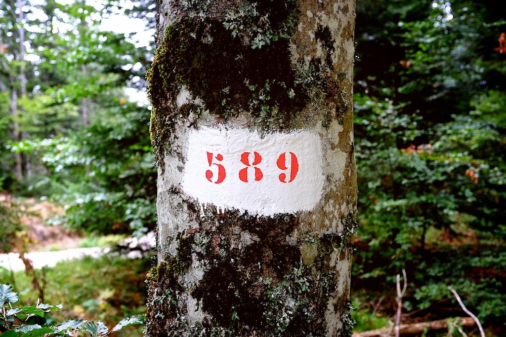 DSCF1827