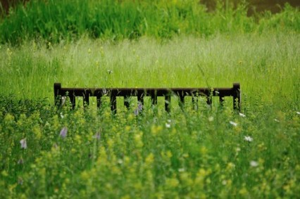 Hidden in an English Meadow