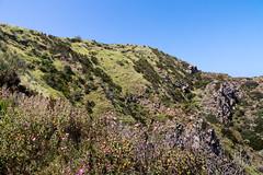 Grüne Insel Panarea