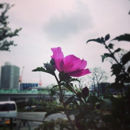 これも夏の花?