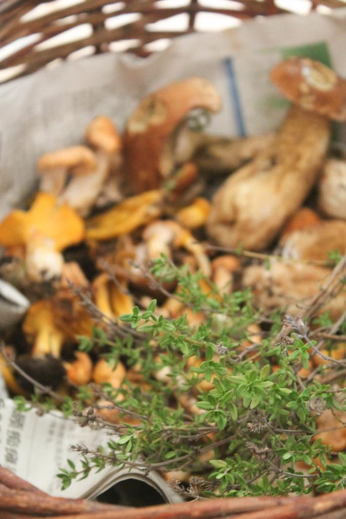 Recette tartines aux champignons