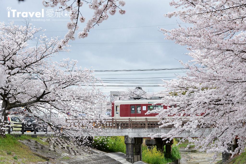 奈良赏樱景点 高田川千本樱 56
