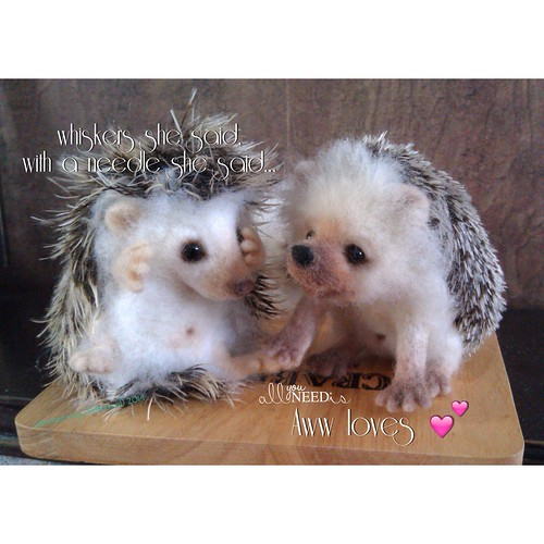 Aww loves hedgehogs