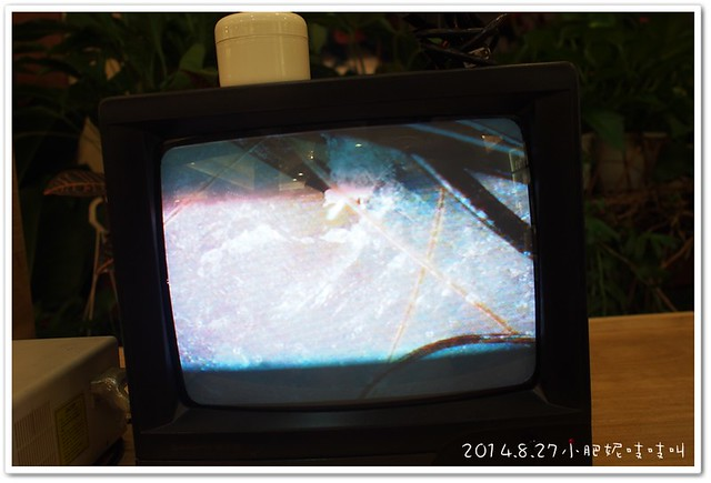 P8273853-20140914