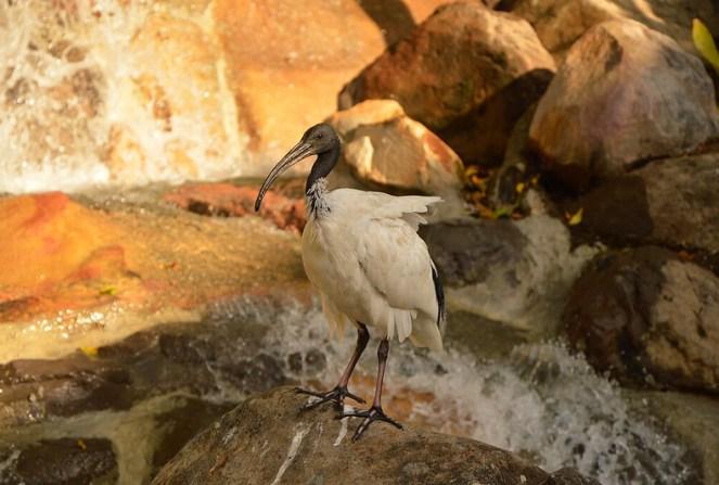 manual photography, bird, gold coast, dreamworld