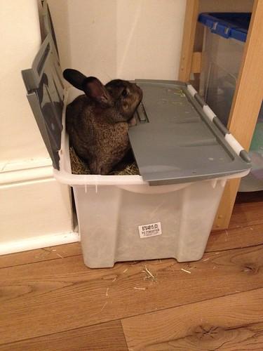 Oscar in hay box (3)