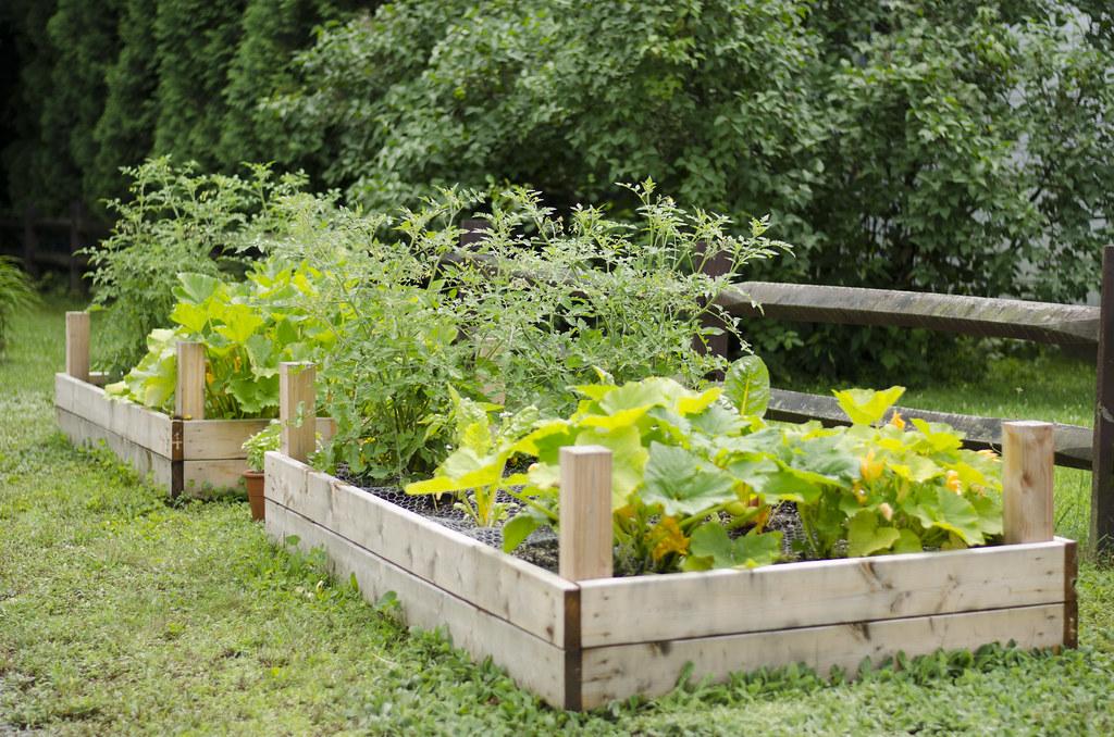 garden 2014 // week six 7