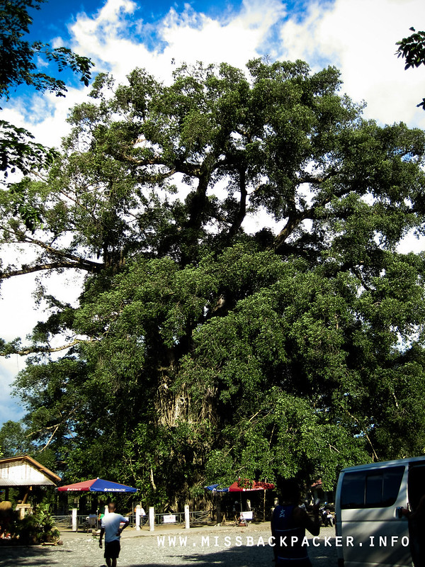 The Old Balete Tree