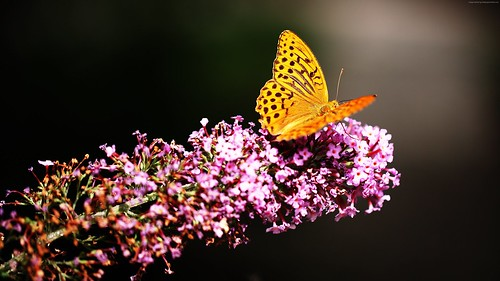 Beautiful Yellow Butterfly Flower 4k Wallpaper #butterfly, #flower, #yellow #animals
