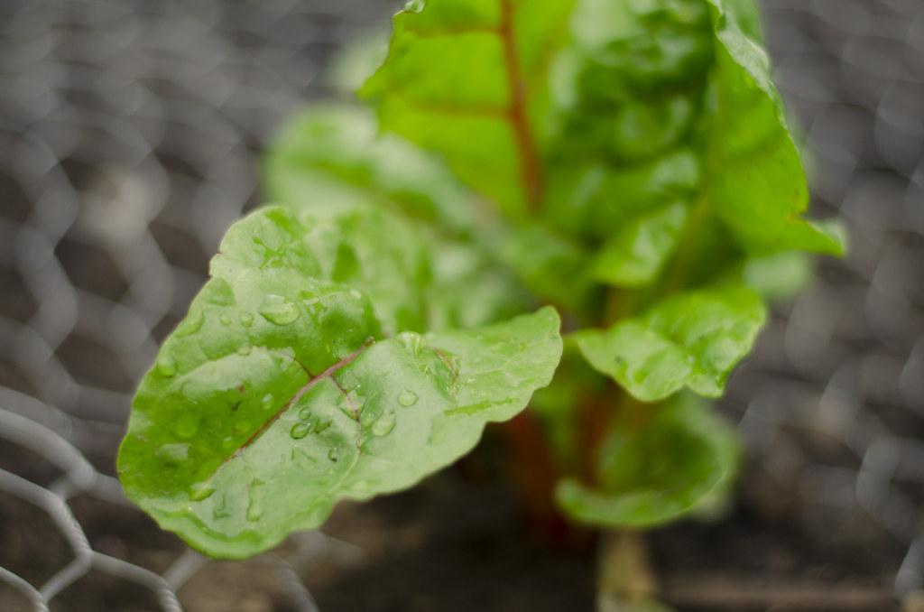garden 2014 // week one 2
